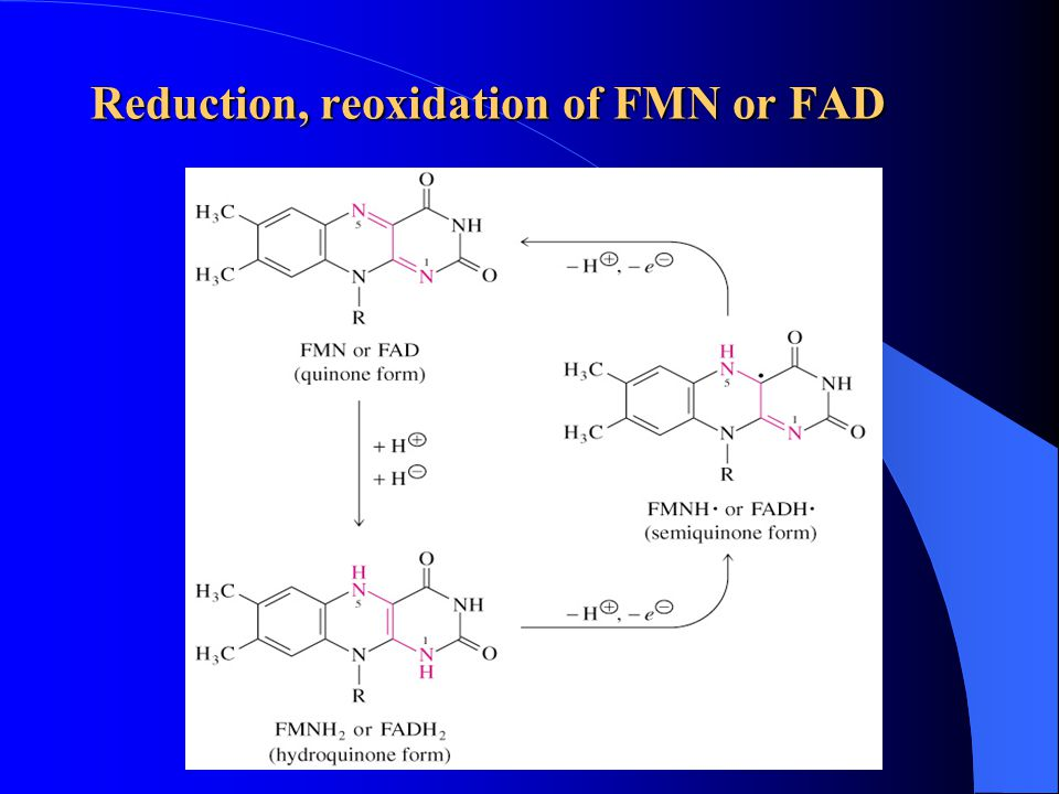 Reduction, reoxidation of FMN or FAD