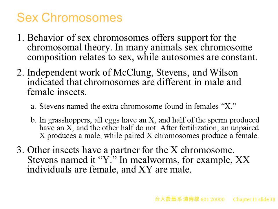 台大農藝系 遺傳學 601 20000 Chapter 11 slide 38 Sex Chromosomes 1.Behavior of sex chromosomes offers support for the chromosomal theory. In many animals sex c