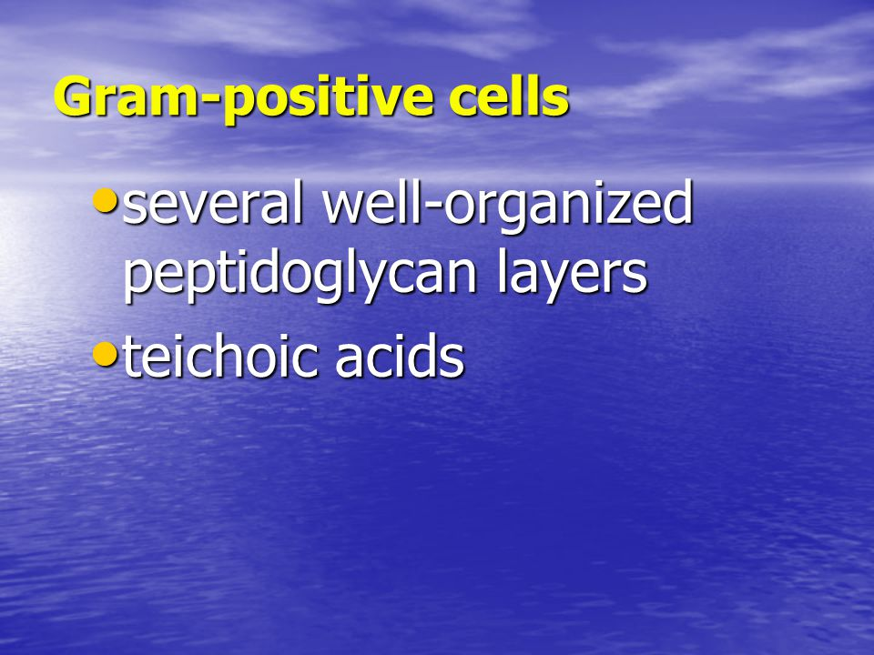 Gram-positive cells several well-organized peptidoglycan layers several well-organized peptidoglycan layers teichoic acids teichoic acids