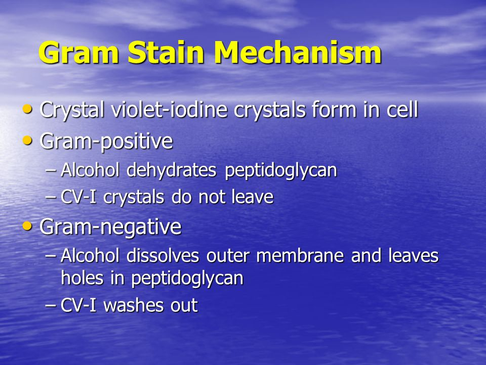 Crystal violet-iodine crystals form in cell Crystal violet-iodine crystals form in cell Gram-positive Gram-positive –Alcohol dehydrates peptidoglycan –CV-I crystals do not leave Gram-negative Gram-negative –Alcohol dissolves outer membrane and leaves holes in peptidoglycan –CV-I washes out Gram Stain Mechanism