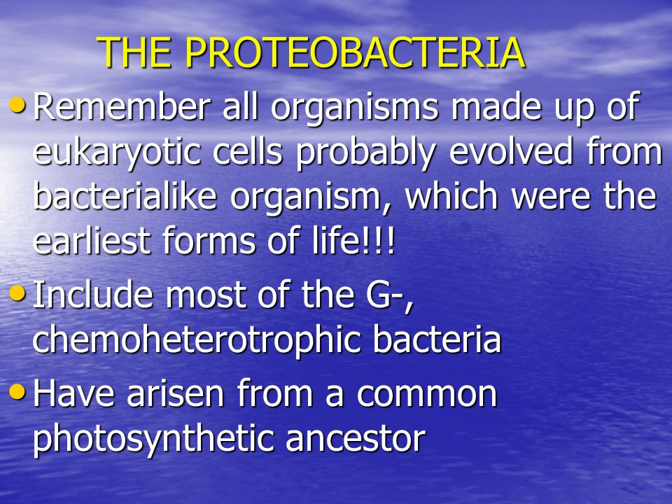 THE PROTEOBACTERIA Remember all organisms made up of eukaryotic cells probably evolved from bacterialike organism, which were the earliest forms of life!!.