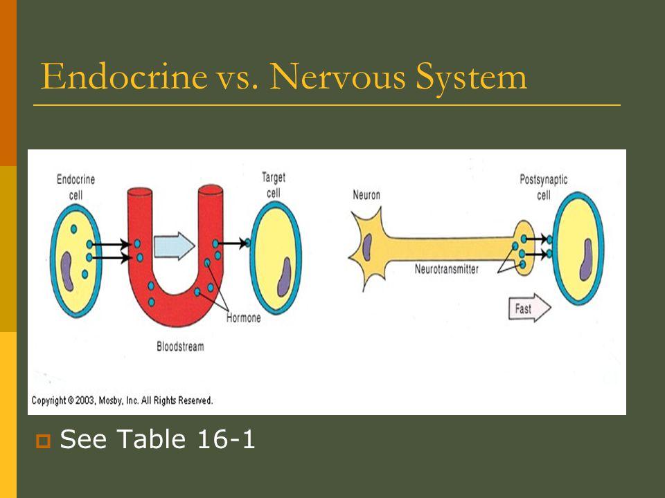 Vocabulary Words  Hormone  Synergism  Permissiveness  Antagonism  Tropic hormones  Sex hormones  Anabolic hormones