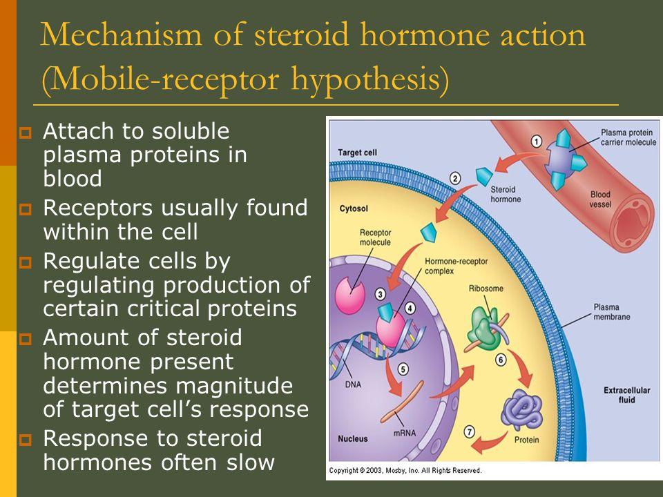 Mechanisms of Nonsteroid Hormones  Second messenger mechanism: also called fixed-membrane-receptor hypothesis  Nuclear receptor mechanism