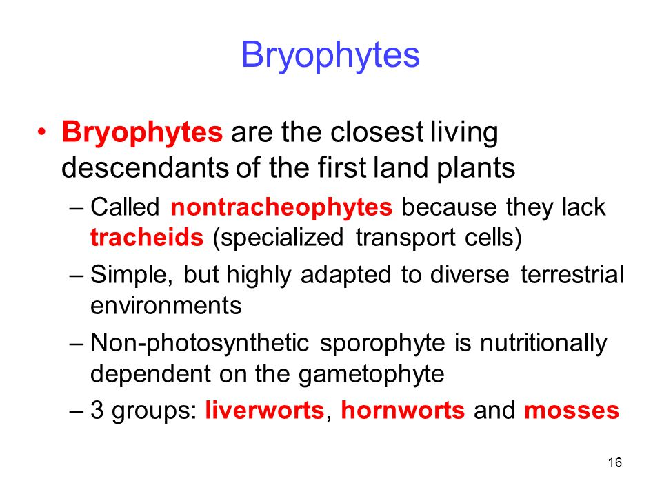 16 Bryophytes Bryophytes are the closest living descendants of the first land plants –Called nontracheophytes because they lack tracheids (specialized