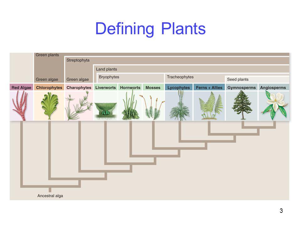 3 Defining Plants