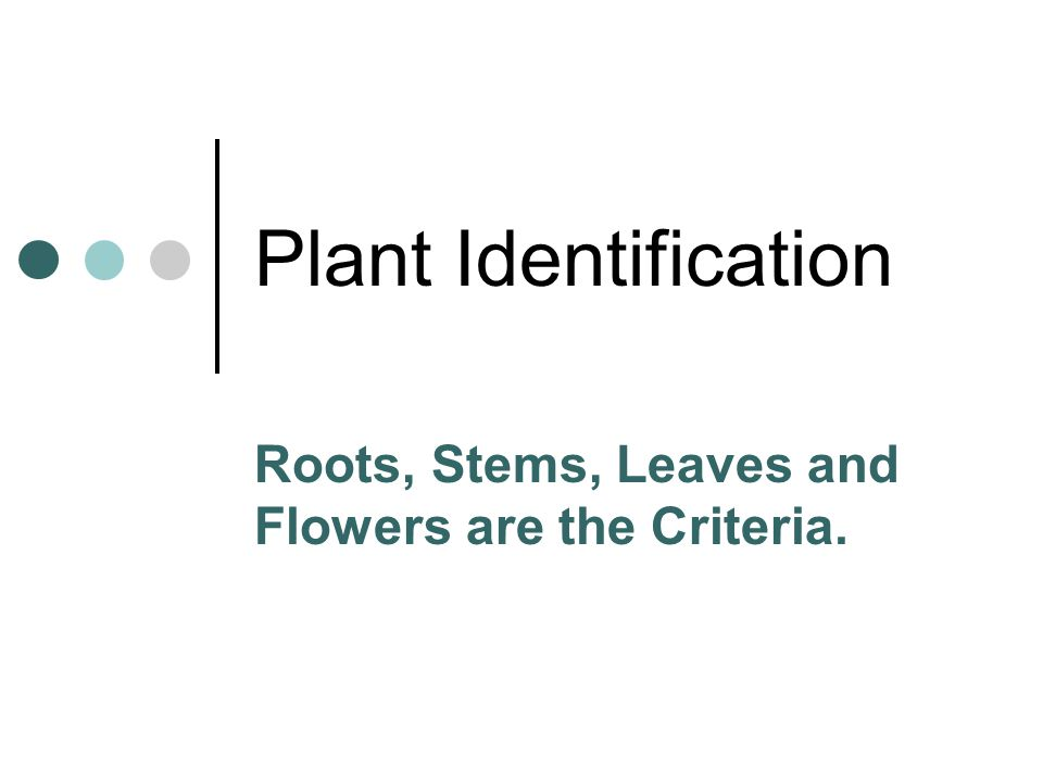 Plant Identification Roots, Stems, Leaves and Flowers are the Criteria.