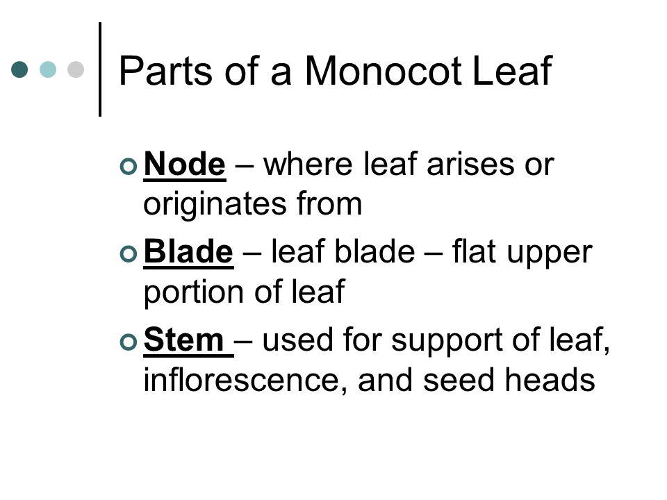 Parts of a Monocot Leaf Node – where leaf arises or originates from Blade – leaf blade – flat upper portion of leaf Stem – used for support of leaf, i