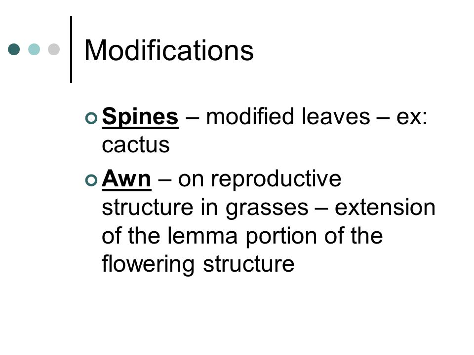Modifications Spines – modified leaves – ex: cactus Awn – on reproductive structure in grasses – extension of the lemma portion of the flowering struc