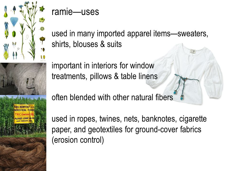 ramie—uses used in many imported apparel items—sweaters, shirts, blouses & suits important in interiors for window treatments, pillows & table linens