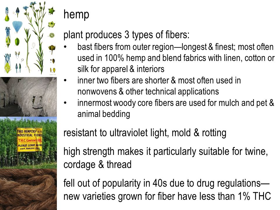 hemp plant produces 3 types of fibers: bast fibers from outer region—longest & finest; most often used in 100% hemp and blend fabrics with linen, cotton or silk for apparel & interiors inner two fibers are shorter & most often used in nonwovens & other technical applications innermost woody core fibers are used for mulch and pet & animal bedding resistant to ultraviolet light, mold & rotting high strength makes it particularly suitable for twine, cordage & thread fell out of popularity in 40s due to drug regulations— new varieties grown for fiber have less than 1% THC