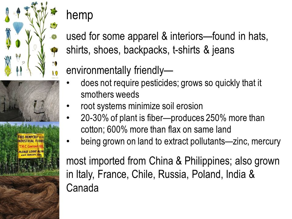 hemp used for some apparel & interiors—found in hats, shirts, shoes, backpacks, t-shirts & jeans environmentally friendly— does not require pesticides; grows so quickly that it smothers weeds root systems minimize soil erosion 20-30% of plant is fiber—produces 250% more than cotton; 600% more than flax on same land being grown on land to extract pollutants—zinc, mercury most imported from China & Philippines; also grown in Italy, France, Chile, Russia, Poland, India & Canada