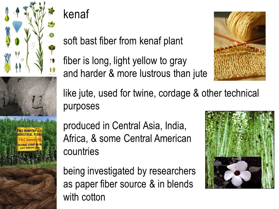 kenaf soft bast fiber from kenaf plant fiber is long, light yellow to gray and harder & more lustrous than jute like jute, used for twine, cordage & other technical purposes produced in Central Asia, India, Africa, & some Central American countries being investigated by researchers as paper fiber source & in blends with cotton