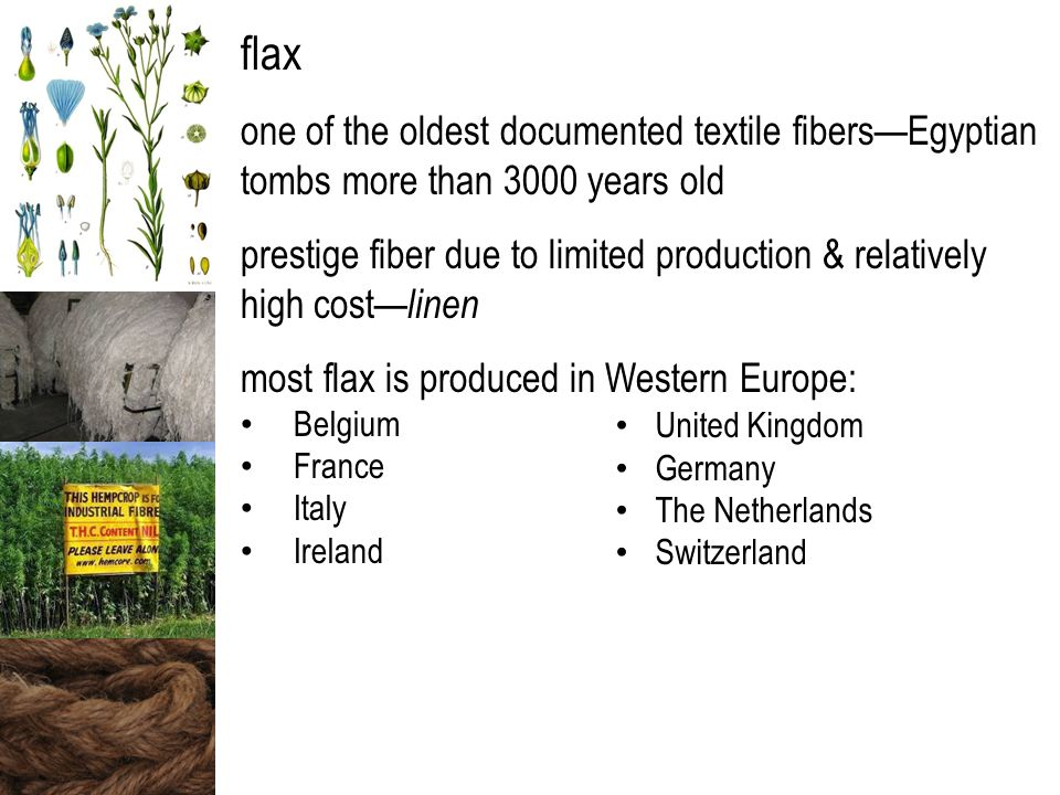 flax one of the oldest documented textile fibers—Egyptian tombs more than 3000 years old prestige fiber due to limited production & relatively high cost— linen most flax is produced in Western Europe: Belgium France Italy Ireland United Kingdom Germany The Netherlands Switzerland