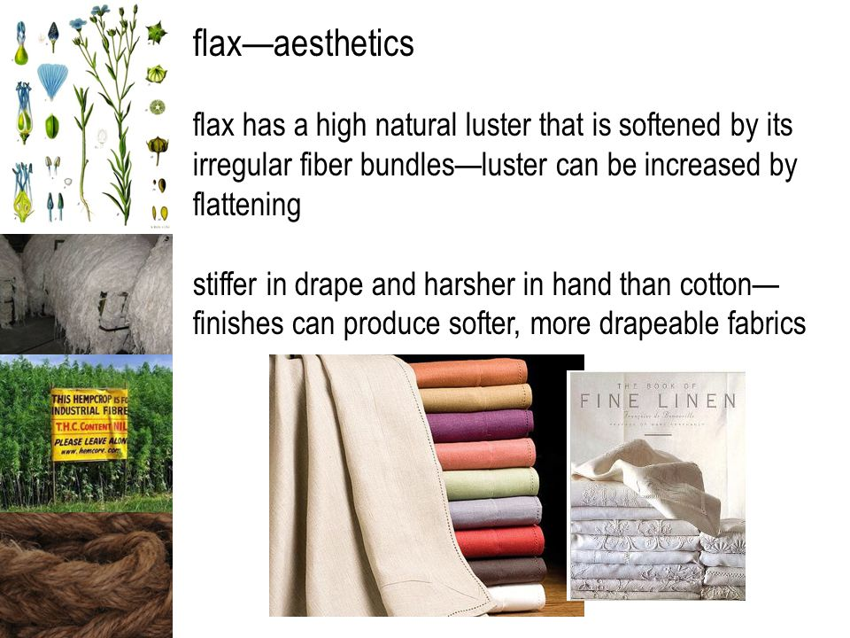 flax—aesthetics flax has a high natural luster that is softened by its irregular fiber bundles—luster can be increased by flattening stiffer in drape and harsher in hand than cotton— finishes can produce softer, more drapeable fabrics