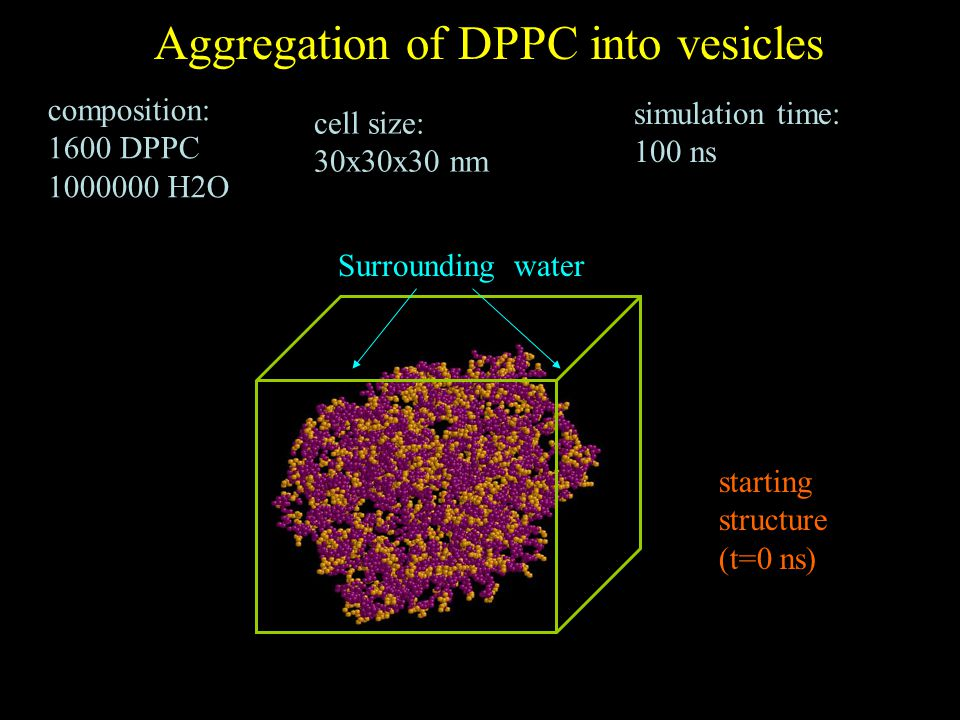 starting structure (t=0 ns) Surrounding water Aggregation of DPPC into vesicles composition: 1600 DPPC 1000000 H2O cell size: 30x30x30 nm simulation time: 100 ns
