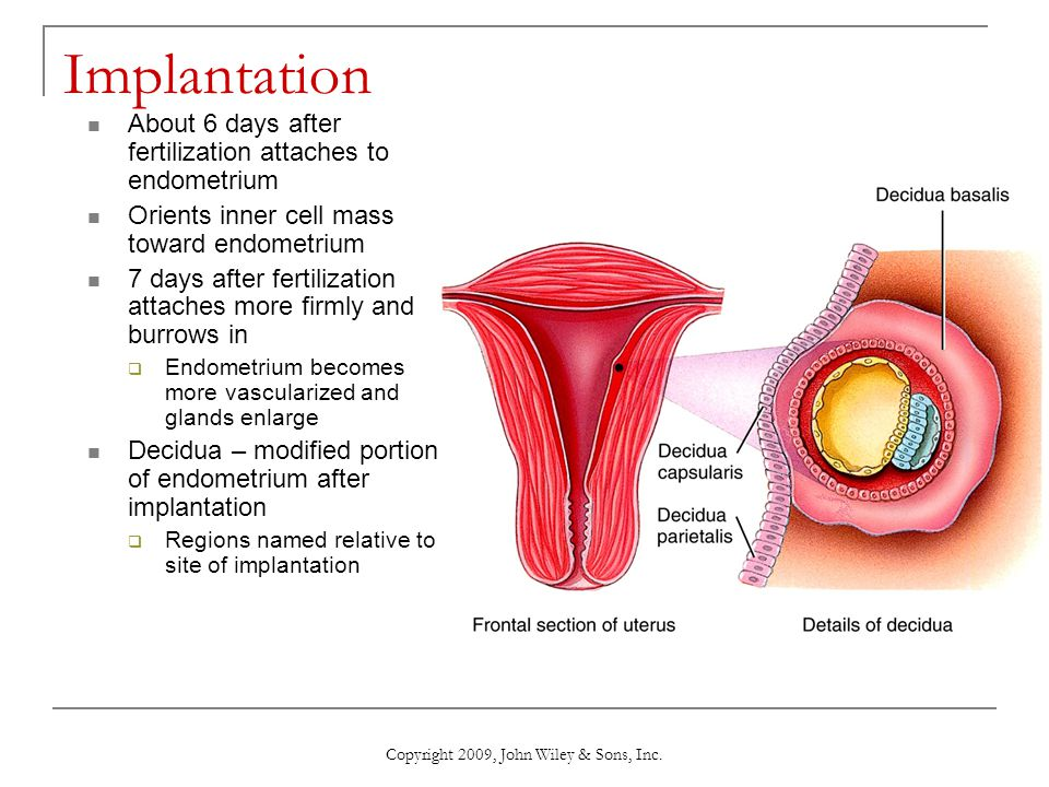 Copyright 2009, John Wiley & Sons, Inc. Implantation About 6 days after fertilization attaches to endometrium Orients inner cell mass toward endometri