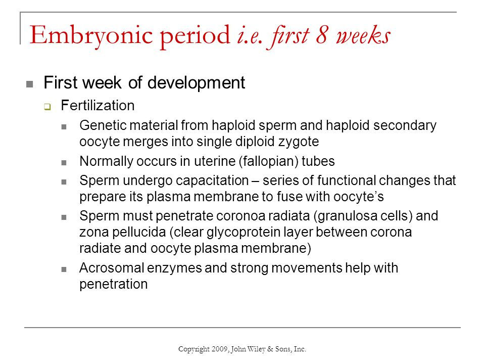 Copyright 2009, John Wiley & Sons, Inc. Embryonic period i.e. first 8 weeks First week of development  Fertilization Genetic material from haploid sp