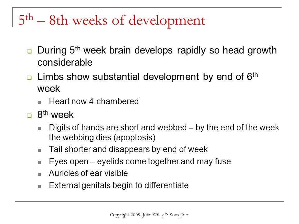 Copyright 2009, John Wiley & Sons, Inc. 5 th – 8th weeks of development  During 5 th week brain develops rapidly so head growth considerable  Limbs