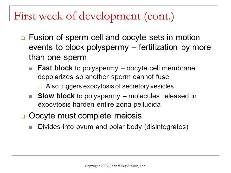 Human Ovary Copyright 2009, John Wiley & Sons, Inc.