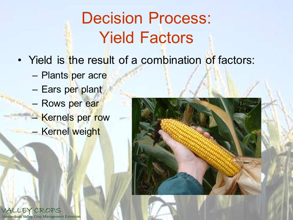 Decision Process: Yield Factors Yield is the result of a combination of factors: –Plants per acre –Ears per plant –Rows per ear –Kernels per row –Kern