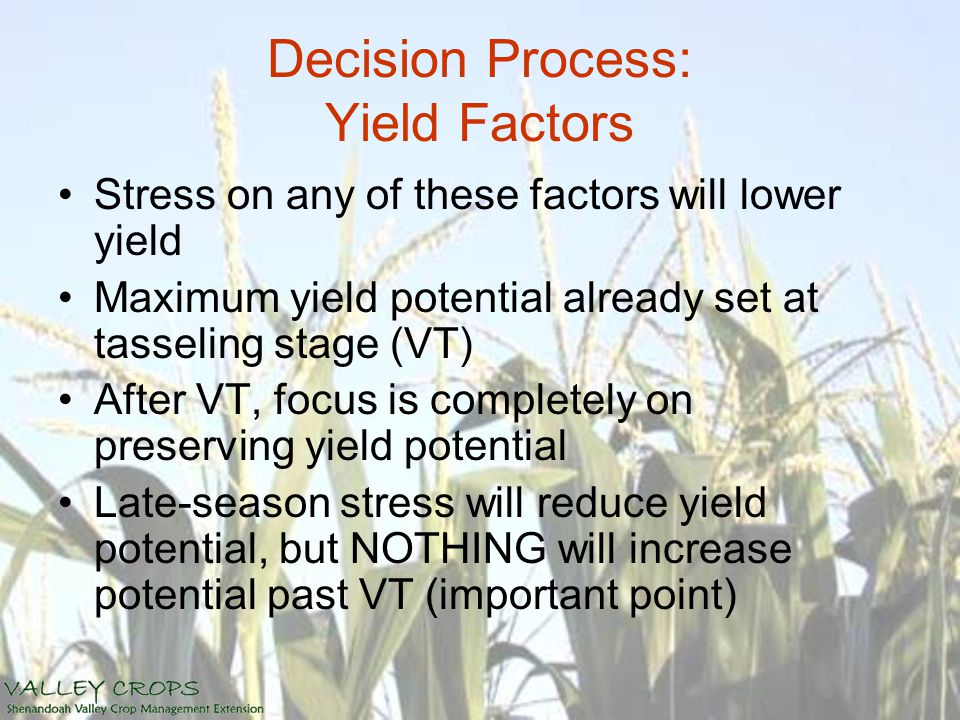Decision Process: Yield Factors Stress on any of these factors will lower yield Maximum yield potential already set at tasseling stage (VT) After VT, focus is completely on preserving yield potential Late-season stress will reduce yield potential, but NOTHING will increase potential past VT (important point)