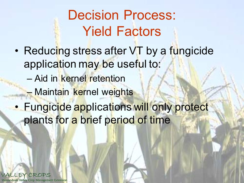 Decision Process: Yield Factors Reducing stress after VT by a fungicide application may be useful to: –Aid in kernel retention –Maintain kernel weights Fungicide applications will only protect plants for a brief period of time
