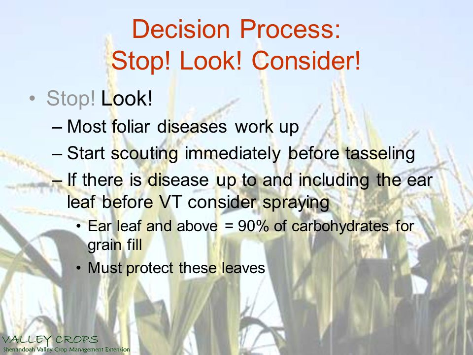Decision Process: Stop! Look! Consider! Stop! Look! –Most foliar diseases work up –Start scouting immediately before tasseling –If there is disease up