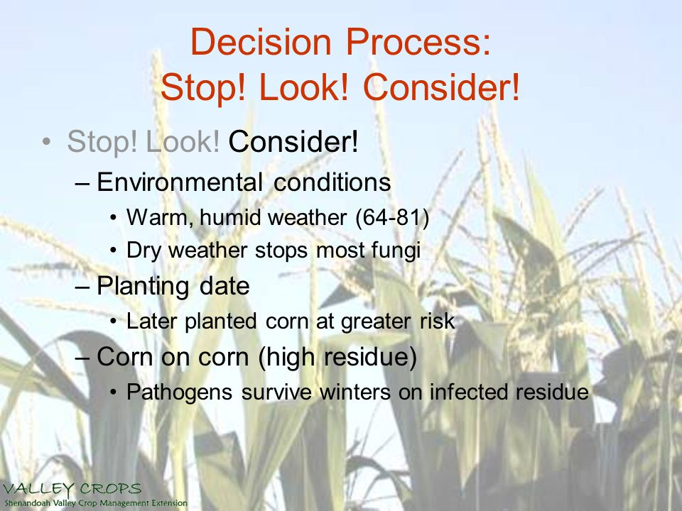 Decision Process: Stop! Look! Consider! Stop! Look! Consider! –Environmental conditions Warm, humid weather (64-81) Dry weather stops most fungi –Plan