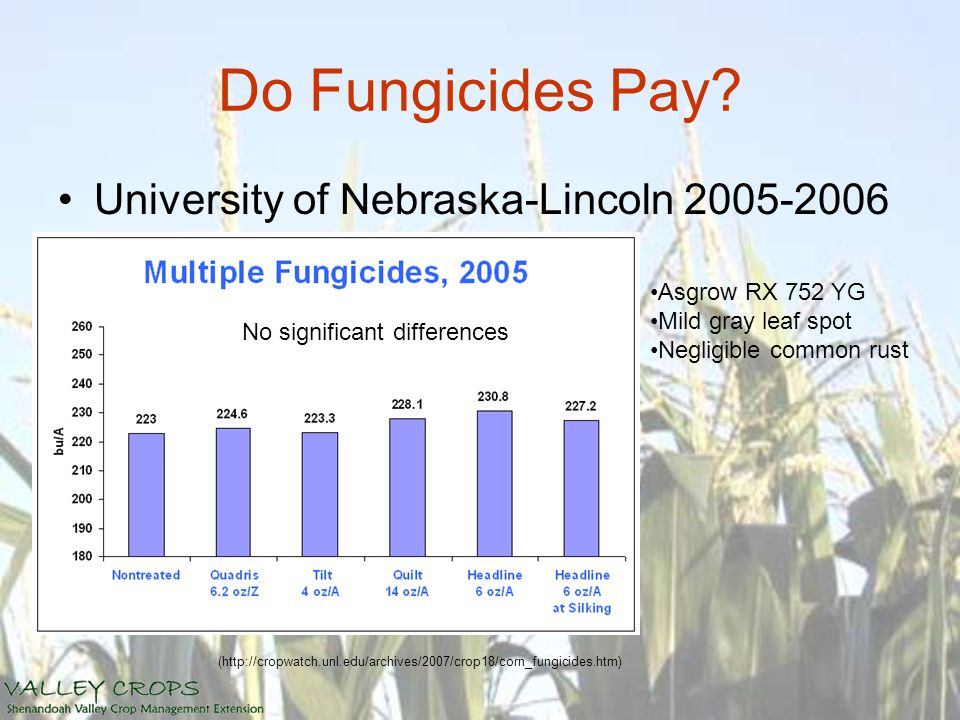 Do Fungicides Pay? University of Nebraska-Lincoln 2005-2006 (http://cropwatch.unl.edu/archives/2007/crop18/corn_fungicides.htm) No significant differe