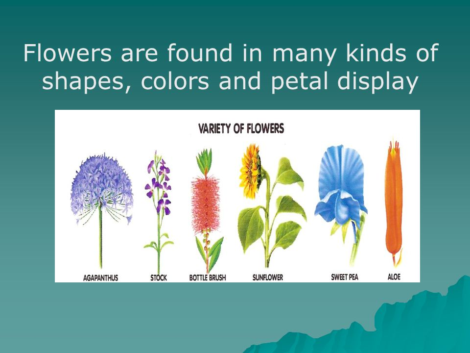 Flowers are found in many kinds of shapes, colors and petal display