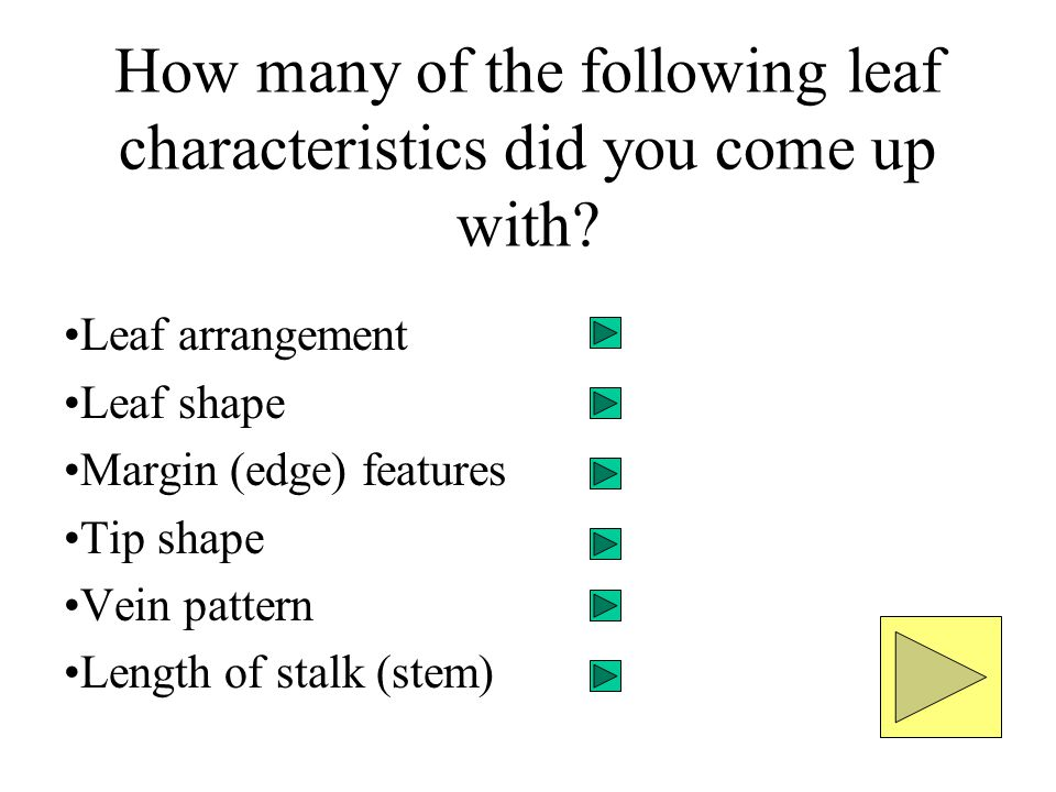 How many of the following leaf characteristics did you come up with? Leaf arrangement Leaf shape Margin (edge) features Tip shape Vein pattern Length