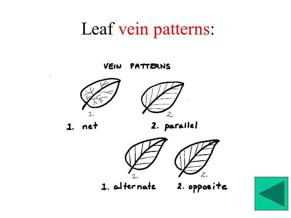Leaf vein patterns: