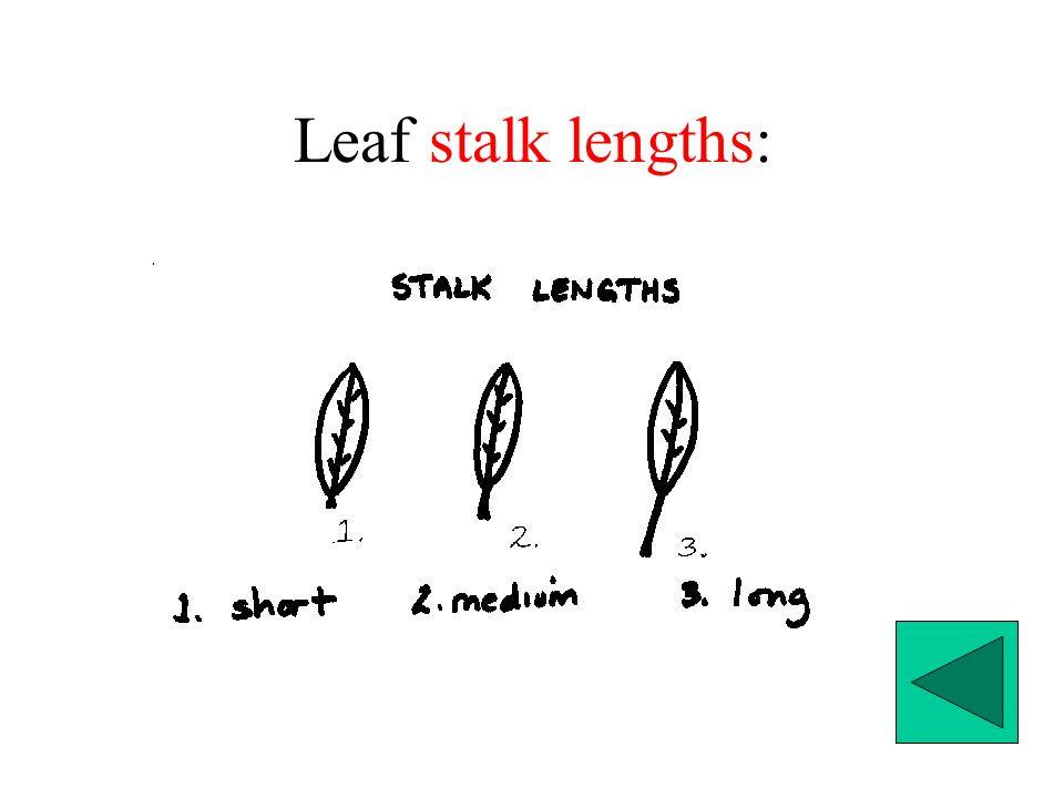 Leaf stalk lengths: