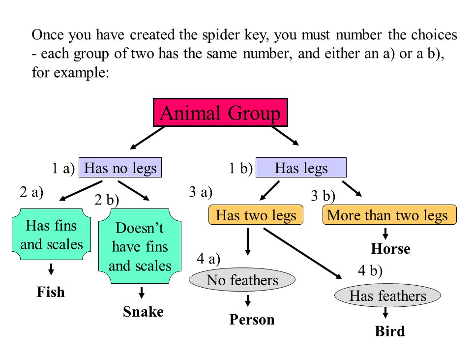 Animal Group Has no legsHas legs Has two legsMore than two legs Horse No feathers Has feathers Person Bird Has fins and scales Doesn't have fins and s