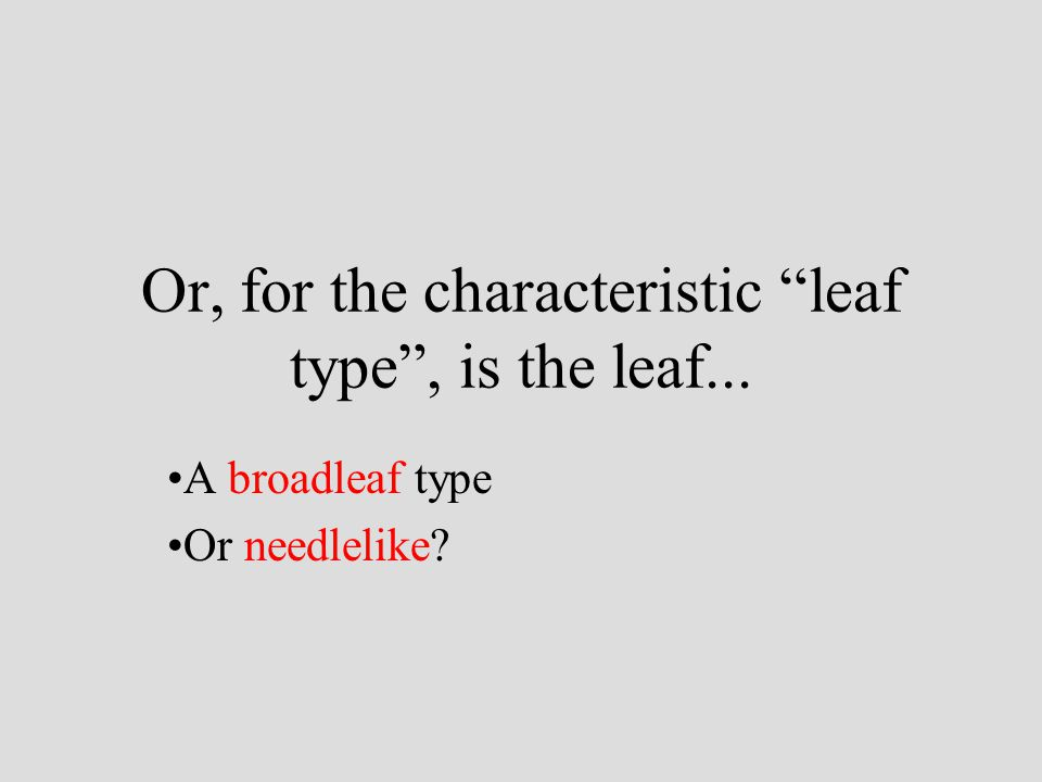 """Or, for the characteristic """"leaf type"""", is the leaf... A broadleaf type Or needlelike?"""