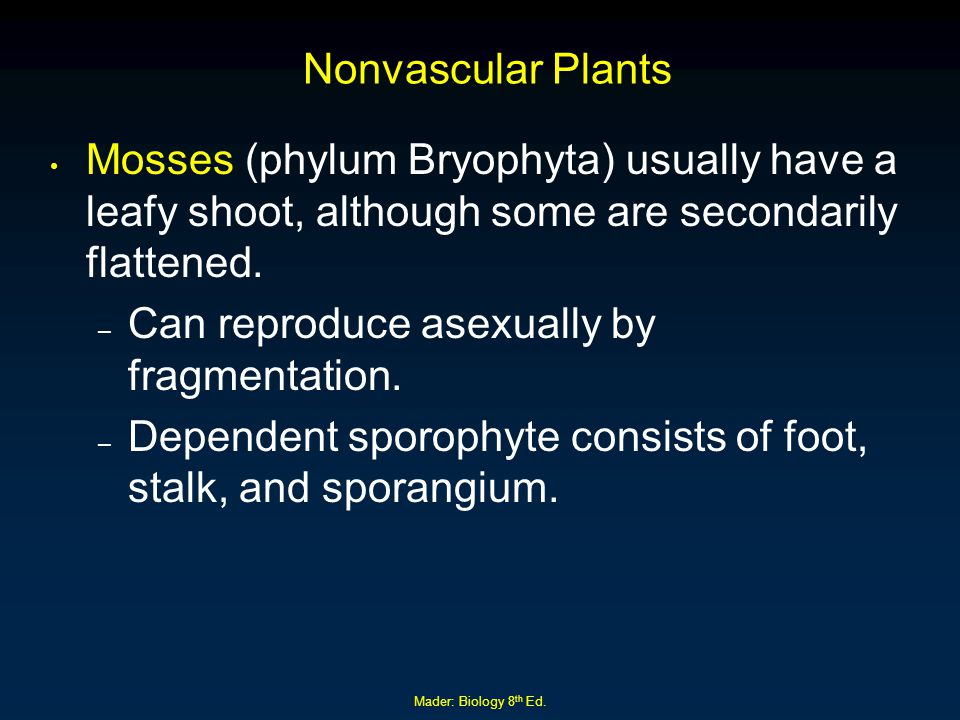 Mader: Biology 8 th Ed. Nonvascular Plants Mosses (phylum Bryophyta) usually have a leafy shoot, although some are secondarily flattened. – Can reprod