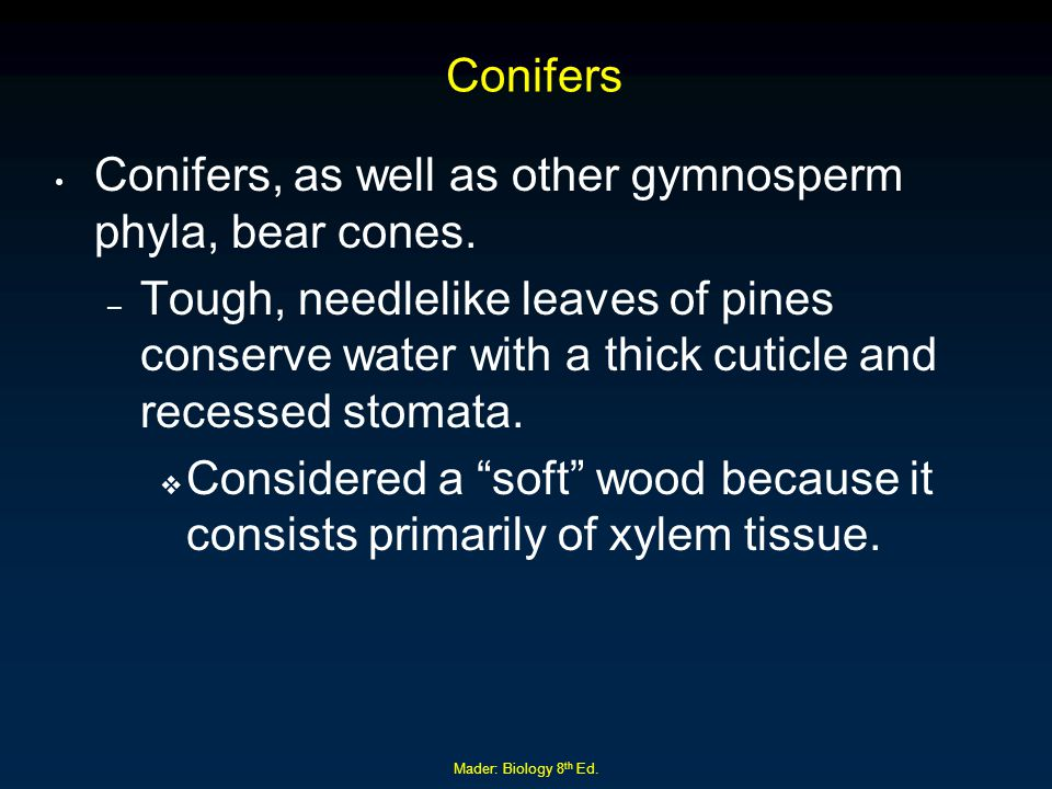 Mader: Biology 8 th Ed. Conifers Conifers, as well as other gymnosperm phyla, bear cones. – Tough, needlelike leaves of pines conserve water with a th