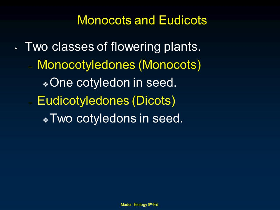 Mader: Biology 8 th Ed. Monocots and Eudicots Two classes of flowering plants. – Monocotyledones (Monocots)  One cotyledon in seed. – Eudicotyledones