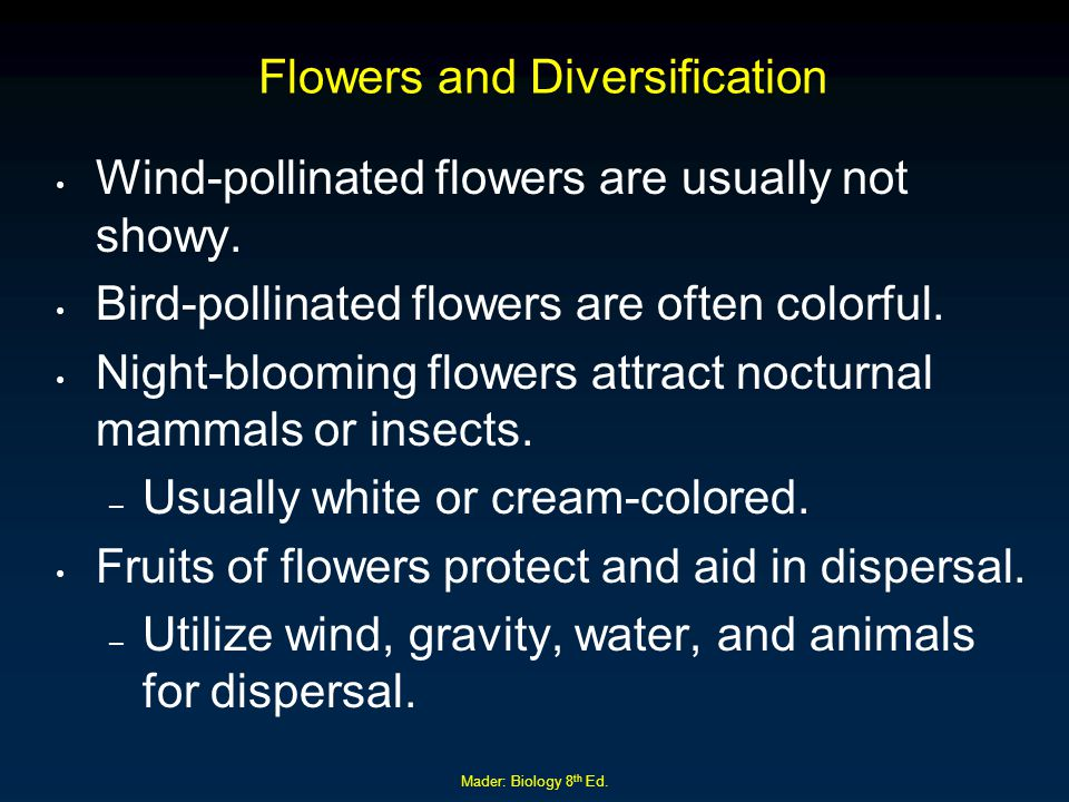 Mader: Biology 8 th Ed. Flowers and Diversification Wind-pollinated flowers are usually not showy. Bird-pollinated flowers are often colorful. Night-b