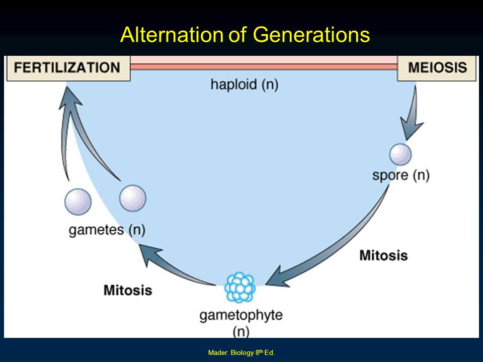 Mader: Biology 8 th Ed. Alternation of Generations