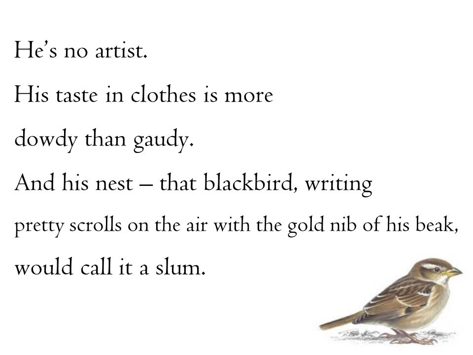 He's no artist. His taste in clothes is more dowdy than gaudy. And his nest – that blackbird, writing pretty scrolls on the air with the gold nib of h