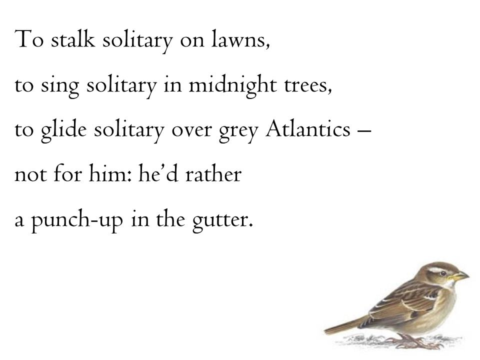 To stalk solitary on lawns, to sing solitary in midnight trees, to glide solitary over grey Atlantics – not for him: he'd rather a punch-up in the gut