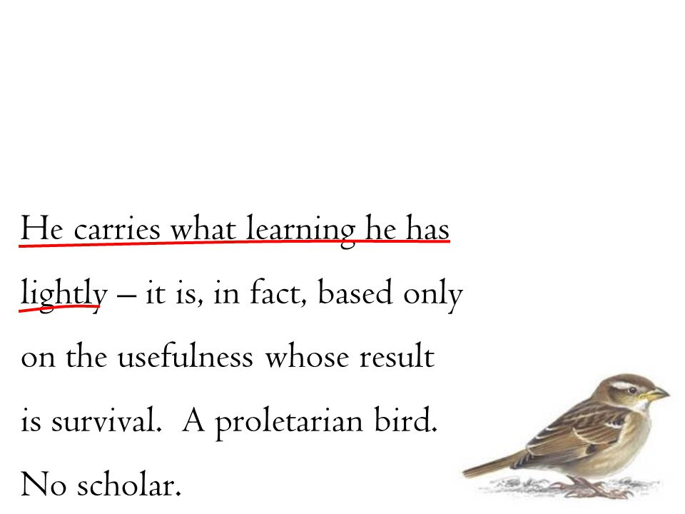 He carries what learning he has lightly – it is, in fact, based only on the usefulness whose result is survival. A proletarian bird. No scholar.