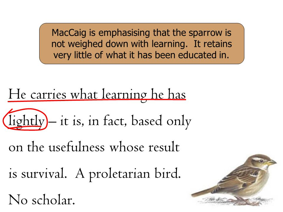 He carries what learning he has lightly – it is, in fact, based only on the usefulness whose result is survival. A proletarian bird. No scholar. MacCa