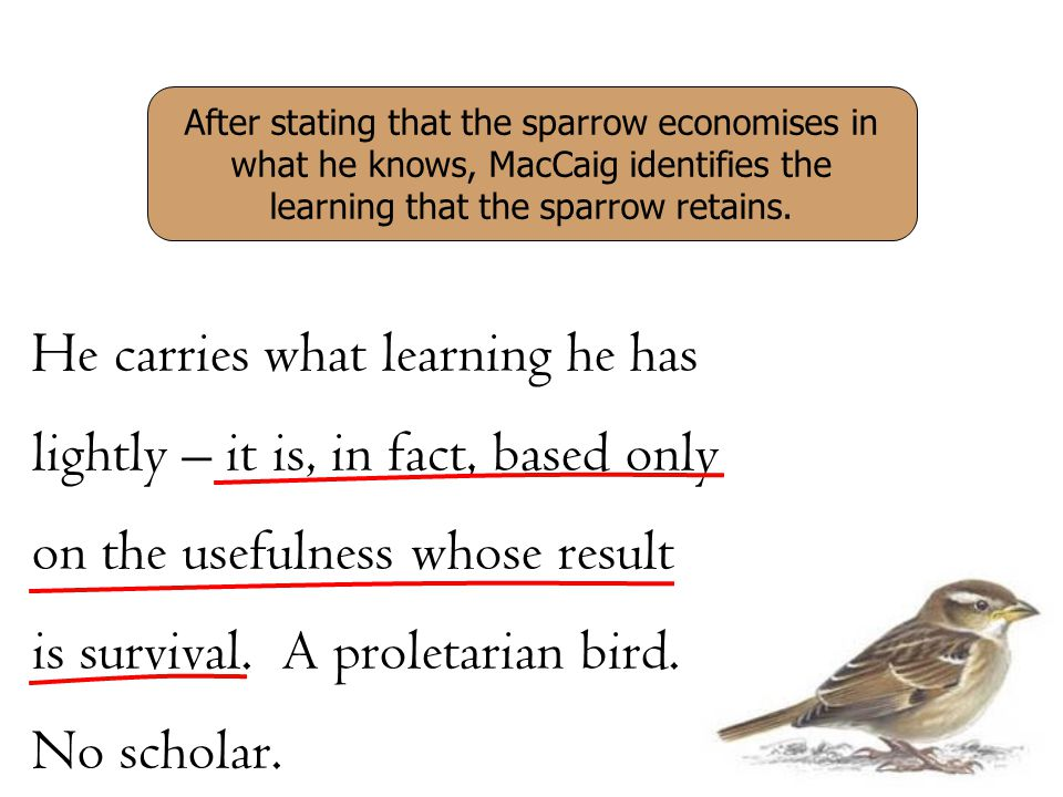 After stating that the sparrow economises in what he knows, MacCaig identifies the learning that the sparrow retains.