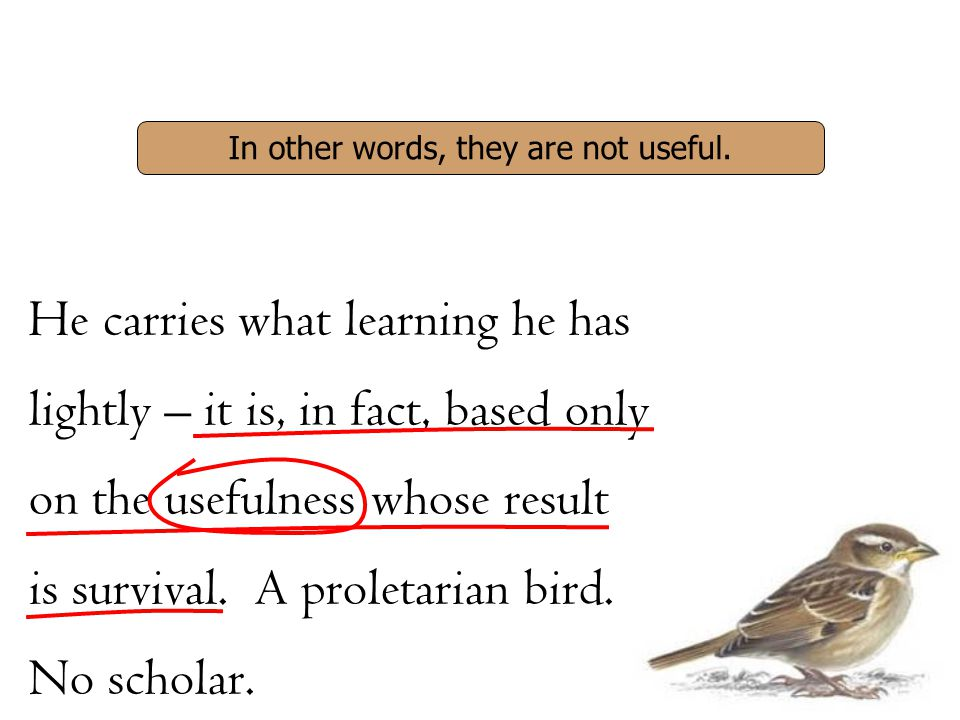 He carries what learning he has lightly – it is, in fact, based only on the usefulness whose result is survival. A proletarian bird. No scholar. In ot