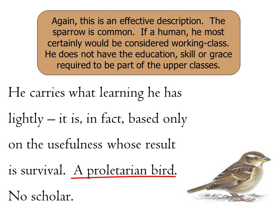 He carries what learning he has lightly – it is, in fact, based only on the usefulness whose result is survival. A proletarian bird. No scholar. Again