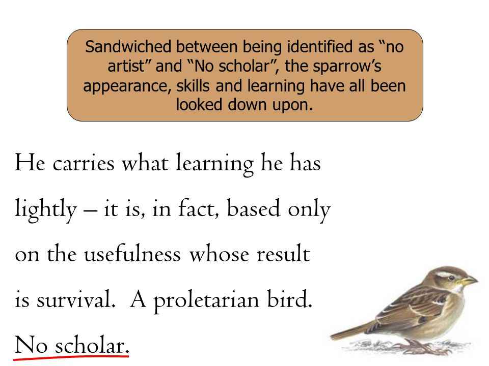 He carries what learning he has lightly – it is, in fact, based only on the usefulness whose result is survival. A proletarian bird. No scholar. Sandw