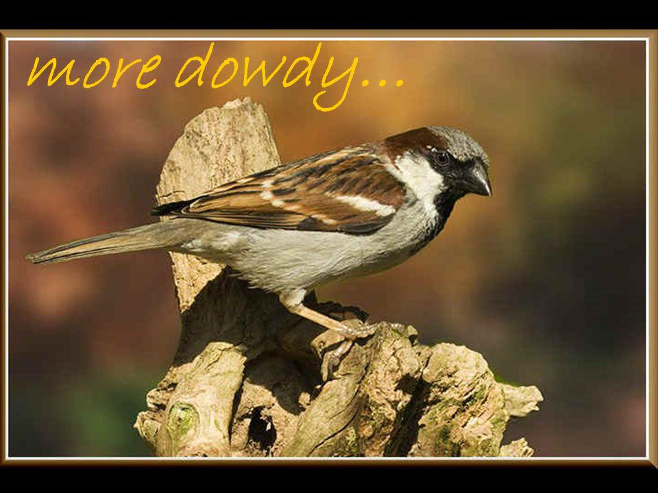 more dowdy…