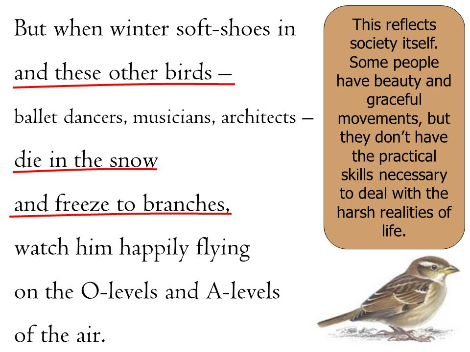 But when winter soft-shoes in and these other birds – ballet dancers, musicians, architects – die in the snow and freeze to branches, watch him happil